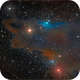LDN1235 The Dark Shark Nebula,                                Randal Healey
