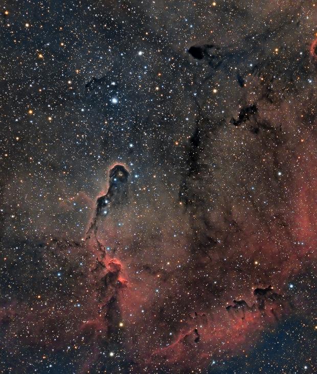 Elephant's Trunk Nebula (IC 1396 A),                                Henning Schmidt