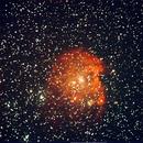 Live View of the Monkey Head Nebula,                                Bruce Donzanti