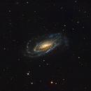 NGC 5033,                                Andrew Barton