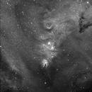 Conus nebula area H-Alpha,                                Giancarlo Vignale