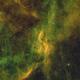 DWB 111 Bi-color,                                tobiassimona