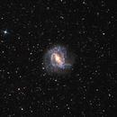 M83 Southern Pinwheel / Thousand Ruby Galaxy,                                Todd