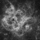 The Tarantula Nebula - NGC2070 in Ha,                                Andrew Dallow