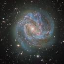 Messier 83 (Southern Pinwheel Galaxy),                                Miles Zhou