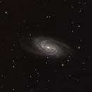 NGC 2903 Galaxy,                                Steven Rosen