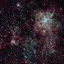 Tarantula Nebula,                                Max Mayer