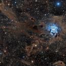 NGC 7023 - Iris Nebula,                                Paddy Gilliland