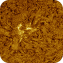 Sunspot in AR2737, HA, Colored, 04-03-2019,                                Martin (Marty) Wise