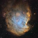 The Monkey Head Nebula,                                Frank Kane