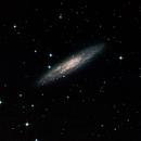 Sculptor Galaxy (NGC 253),                                phoenixfabricio07