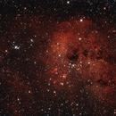 IC410 Tadpoles Nebula,                                Richard Cardoe