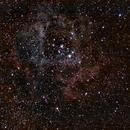 NGC 2244 Rosette Nebula a Short Experiment,                                John Richards