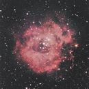 The Rosette Nebula,                                Dylan Webster
