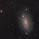 The Sunflower Galaxy (M63) in LRGB,                                Josh Woodward