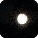 Full Moon behind the trees,                                Cyril NOGER