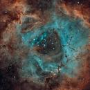A Red Rose,                                north.stargazer