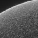 Sun 4_8_20 Ha Active region,                                Alan