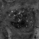 The Rosette Nebula,                                Gintas Rudzevicius