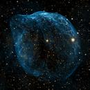 Dolphin Head Nebula SH2-308,                                Todd DeGidio