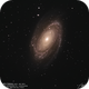 Bode's Galaxy (M 81 - NGC 3031),                                Godfried