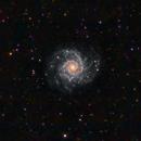 M74 - The Phantom Galaxy,                                Patrick Cosgrove