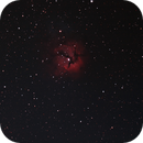 Triffid Nebula - M20,                                Pat Darmody