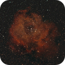 NGC 2244, Rosette Nebula,                                Matt Carter