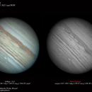 Jupiter - June 29, 2019,                                  Fábio