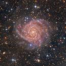 IC 342,                                Bart Delsaert