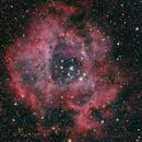 The Rosette Nebula,                                Shannon Calvert