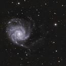Pinwheel Galaxy,                                Robin Clark - EAA imager