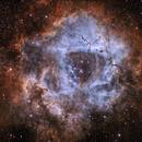 Dusty Rose-- Rosette Nebula (Caldwell 69),                                snakagawa