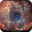 NGC 2244 The Rosette Nebula,                                rigel123
