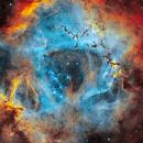 Rosette nebula,                                Nicholas Bradley