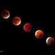 Supermoon Lunar Eclipse 2015 (Mosaic),                                Olivier Ravayrol
