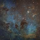 Tadpole Nebula (NGC 1835/IC 410),                                Brandon Tackett