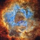 NGC2244 - The Rosette Nebula,                                Jason Wiscovitch
