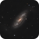 NGC 1808,                                Gary Imm