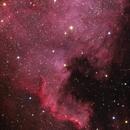North America Nebula (NGC 7000),                                Kristian Vasskog