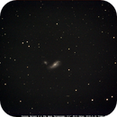 Cocoon Galaxy,                                Bruce Donzanti