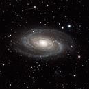 "M81, ""Bode's Galaxy"",                                David Dahlstrom"
