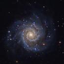 M74 Phantom Galaxy,                                Morris Yoder