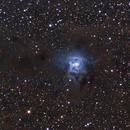 Iris Nebula NGC7023,                                Roger Wilkinson