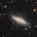 M81 and M82 : a telescopic view,                                Martin Nischang