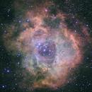 NGC 2244 Rosette,                                Mark Minor