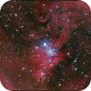 NGC 2264,                                sky-watcher (johny)