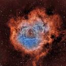 Caldwell 49 - The Rosette Nebula,                                Timothy Martin & Nic Patridge