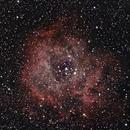 NGC 2238 - Rosette Nebula,                                Stefan Rehder