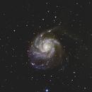 M101,                                Nicole Mortillaro
